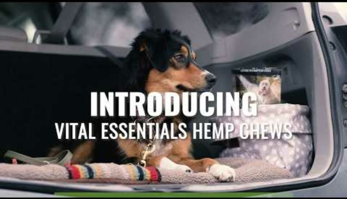 Carnivore Meat Business Partners with Festival Foods to Deal Hemp Chews Throughout Wisconsin